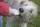 BasicNature Squeeze Tuben für Hunde, à 200 ml, 2 Stück
